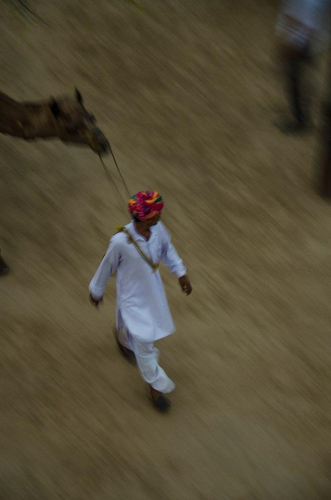 Jaipur-76